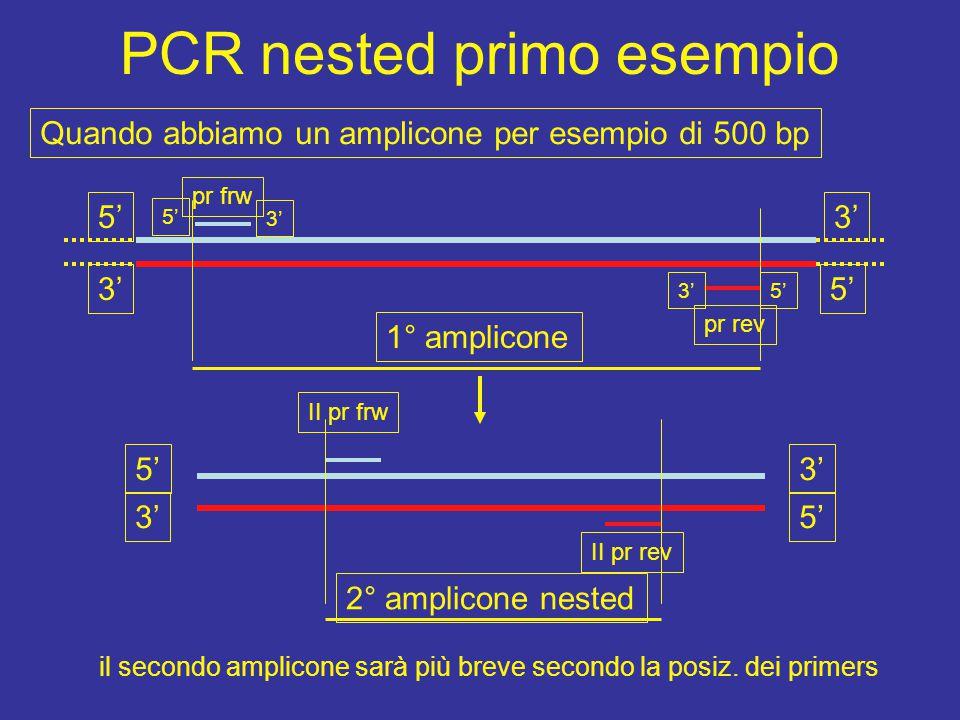 di un frammento f in un amplicone (3 steps = 3 passaggi) frw rev a f f b inserzione frw rev a f b f f annealing di 2 PCR PCR III in 2 fasi x ed y a b inserzione PCR I = a PCR II=b x y 5' 3' elongation primer frw e rev interni sono contigui per poter inserire la sequenza f