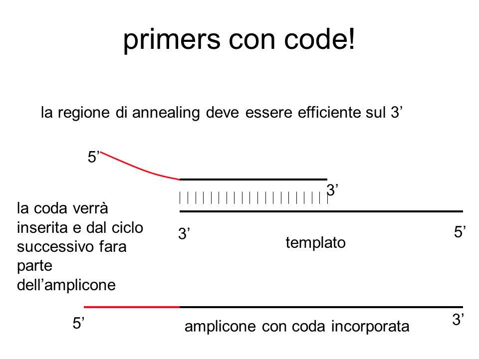 se i primers hanno la coda 5'3' 5' 3' 5' 3' alla polimerase importa solo che il 3' sia appaiato, però la coda del primer sarà incorporato e farà parte dell'amplicone è la stessa cosa che succede in una amplificazione aspecifica in cui solo il 3' del primer (specifico) trova omologia di sequenza e farà amplificare un prodotto non specifico