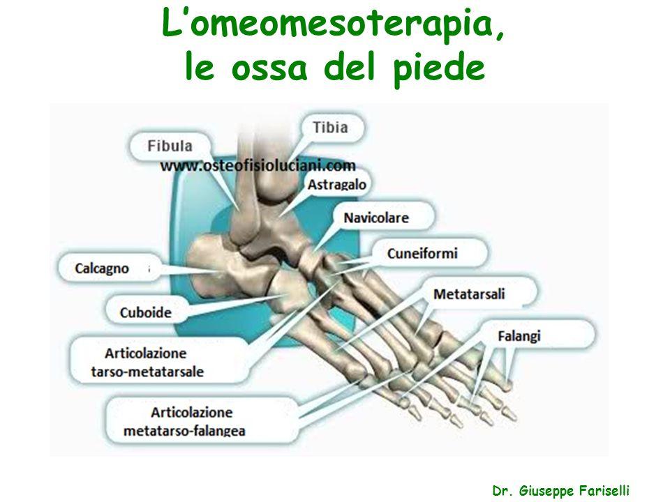 L'omeomesoterapia, le ossa del piede Dr. Giuseppe Fariselli