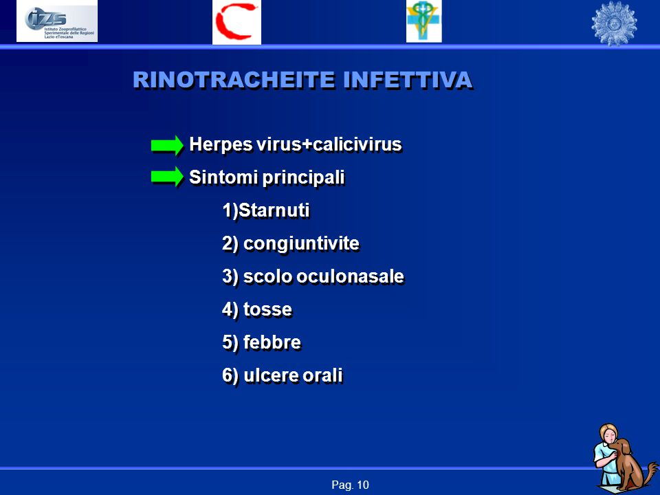 Pag. 10 RINOTRACHEITE INFETTIVA Herpes virus+calicivirus Sintomi principali 1)Starnuti 2) congiuntivite 3) scolo oculonasale 4) tosse 5) febbre 6) ulc