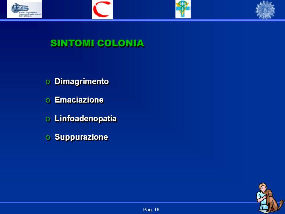 Pag. 16 SINTOMI COLONIA o Dimagrimento o Emaciazione o Linfoadenopatia o Suppurazione o Dimagrimento o Emaciazione o Linfoadenopatia o Suppurazione
