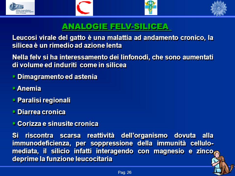 Pag. 26 ANALOGIE FELV-SILICEA Leucosi virale del gatto è una malattia ad andamento cronico, la silicea è un rimedio ad azione lenta Nella felv si ha i