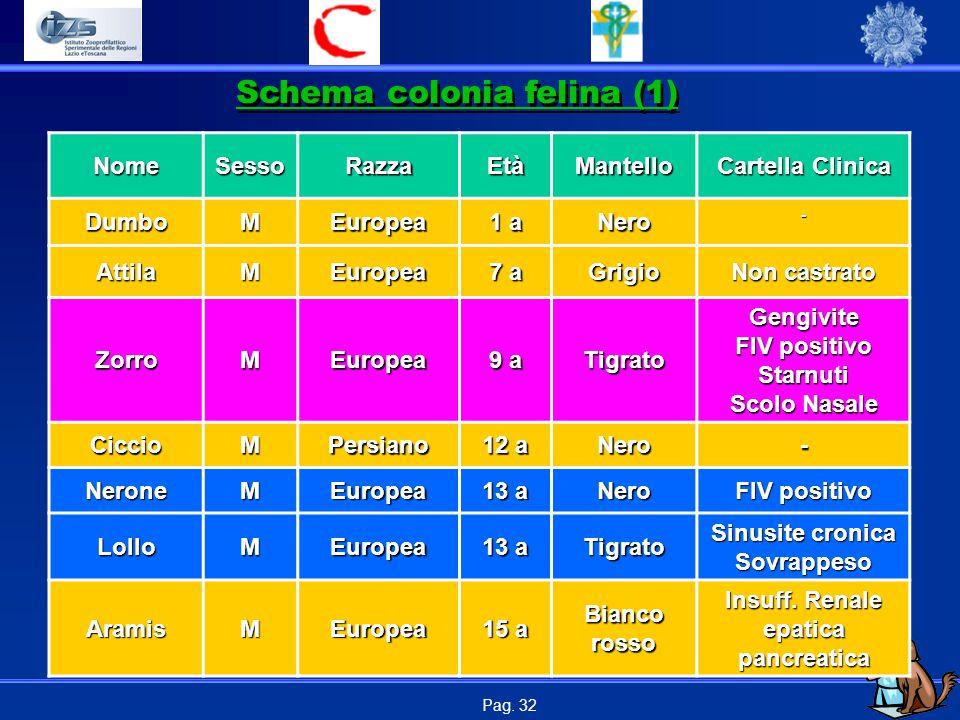 Pag. 32 NomeSessoRazzaEtàMantello Cartella Clinica DumboMEuropea 1 a Nero- AttilaMEuropea 7 a Grigio Non castrato ZorroMEuropea 9 a Tigrato Gengivite