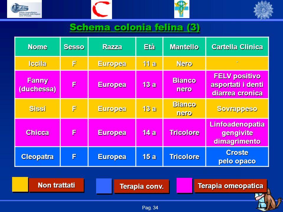 Pag. 34NomeSessoRazzaEtàMantello Cartella Clinica IccilaFEuropea 11 a Nero- Fanny (duchessa) FEuropea 13 a Bianco nero FELV positivo asportati i denti