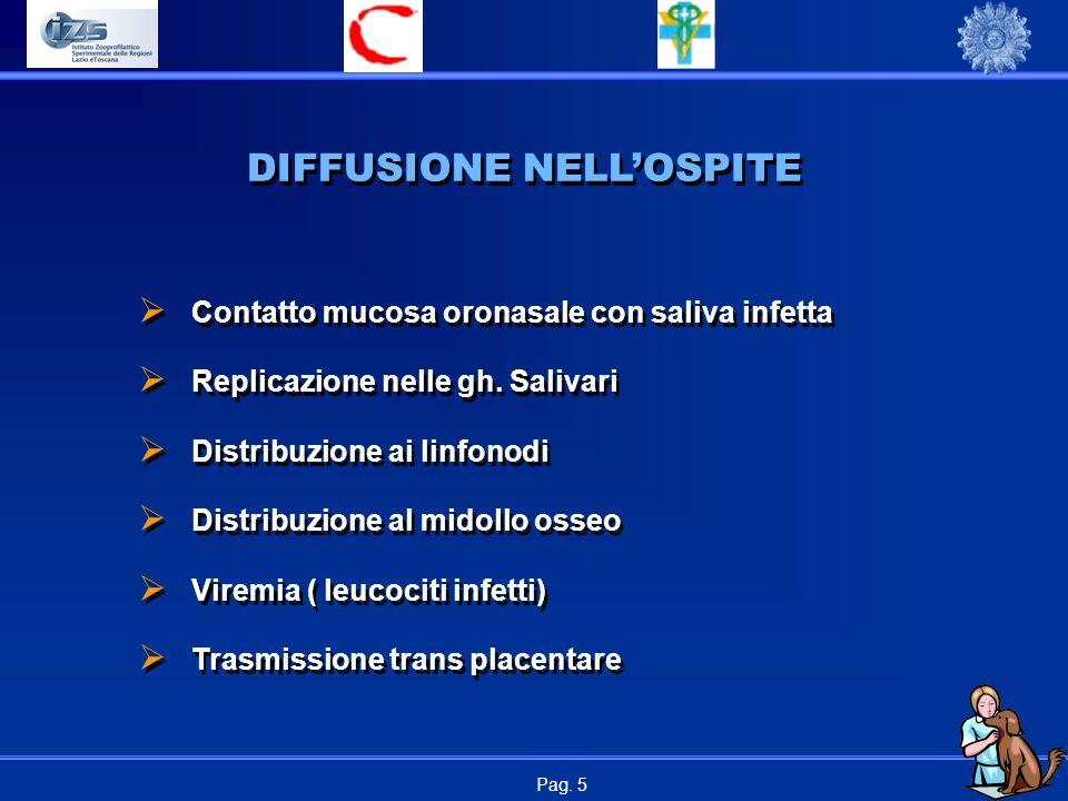 Pag. 5 DIFFUSIONE NELL'OSPITE  Contatto mucosa oronasale con saliva infetta  Replicazione nelle gh. Salivari  Distribuzione ai linfonodi  Distribu