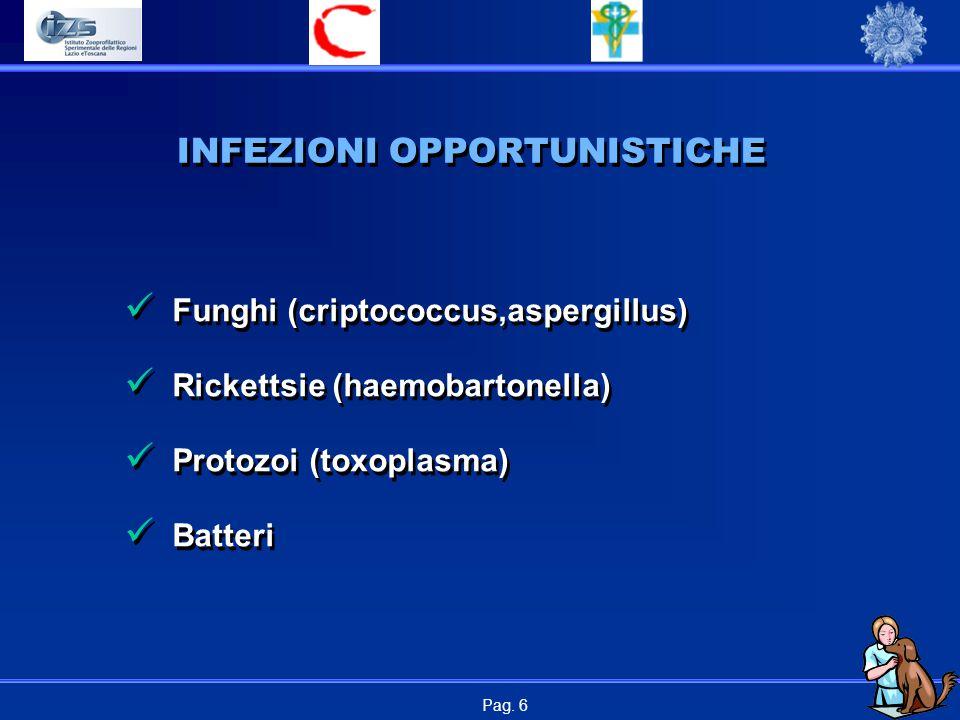 Pag. 6 INFEZIONI OPPORTUNISTICHE Funghi (criptococcus,aspergillus) Rickettsie (haemobartonella) Protozoi (toxoplasma) Batteri Funghi (criptococcus,asp
