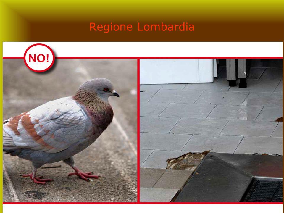 28 Regione Lombardia