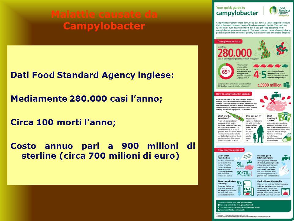 3 Malattie causate da Campylobacter Dati Food Standard Agency inglese: Mediamente 280.000 casi l'anno; Circa 100 morti l'anno; Costo annuo pari a 900