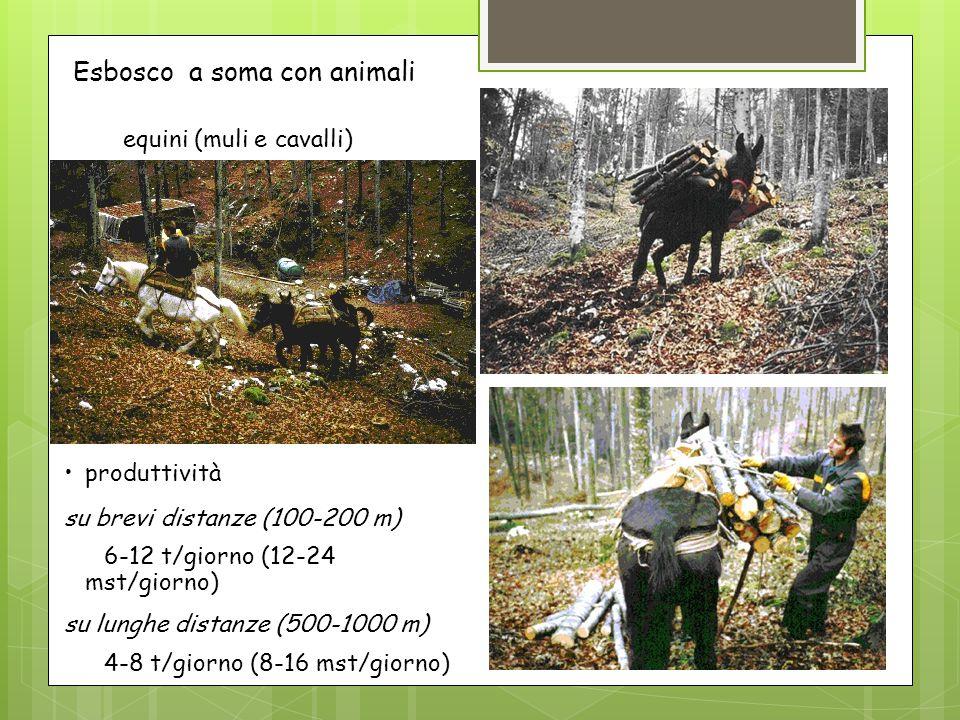 equini (muli e cavalli) Esbosco a soma con animali produttività su brevi distanze (100-200 m) 6-12 t/giorno (12-24 mst/giorno) su lunghe distanze (500-1000 m) 4-8 t/giorno (8-16 mst/giorno)