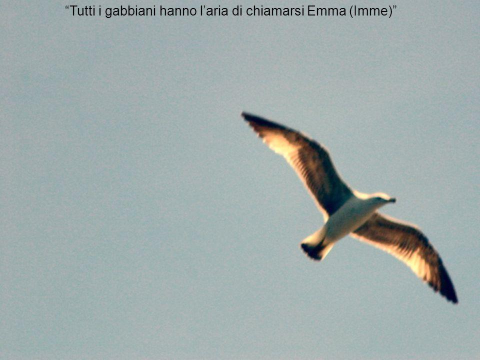 """""""Tutti i gabbiani hanno l'aria di chiamarsi Emma (Imme)"""""""
