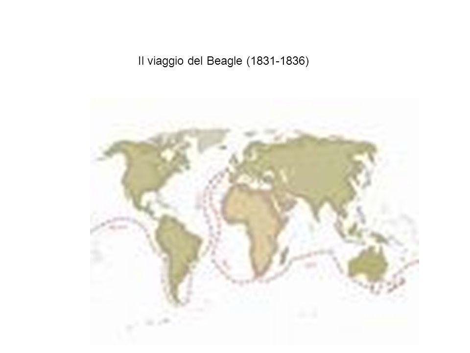 Il viaggio del Beagle (1831-1836)