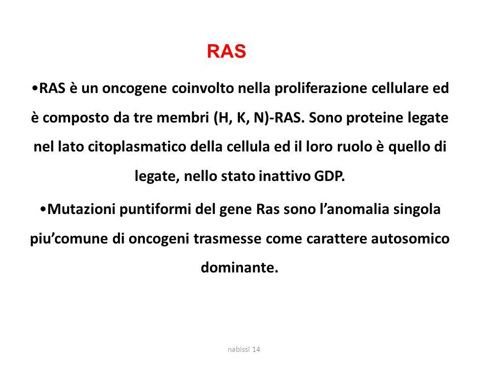 RAS è un oncogene coinvolto nella proliferazione cellulare ed è composto da tre membri (H, K, N)-RAS.
