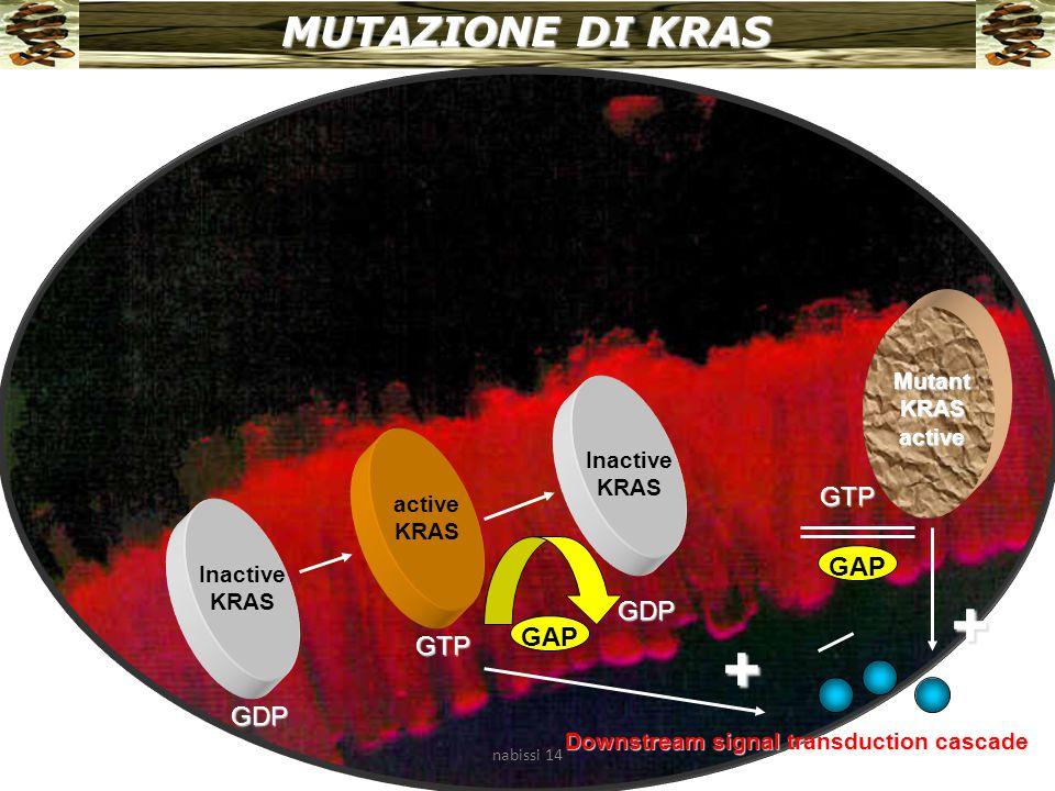 MUTAZIONE DI KRAS Inactive KRAS active KRAS Inactive KRAS GDP GTP GDP GAP Downstream signal transduction cascade + Mutant KRAS active + GTP GAP nabissi 14