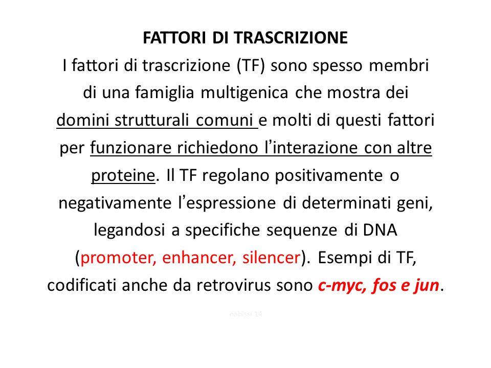 FATTORI DI TRASCRIZIONE I fattori di trascrizione (TF) sono spesso membri di una famiglia multigenica che mostra dei domini strutturali comuni e molti di questi fattori per funzionare richiedono l'interazione con altre proteine.