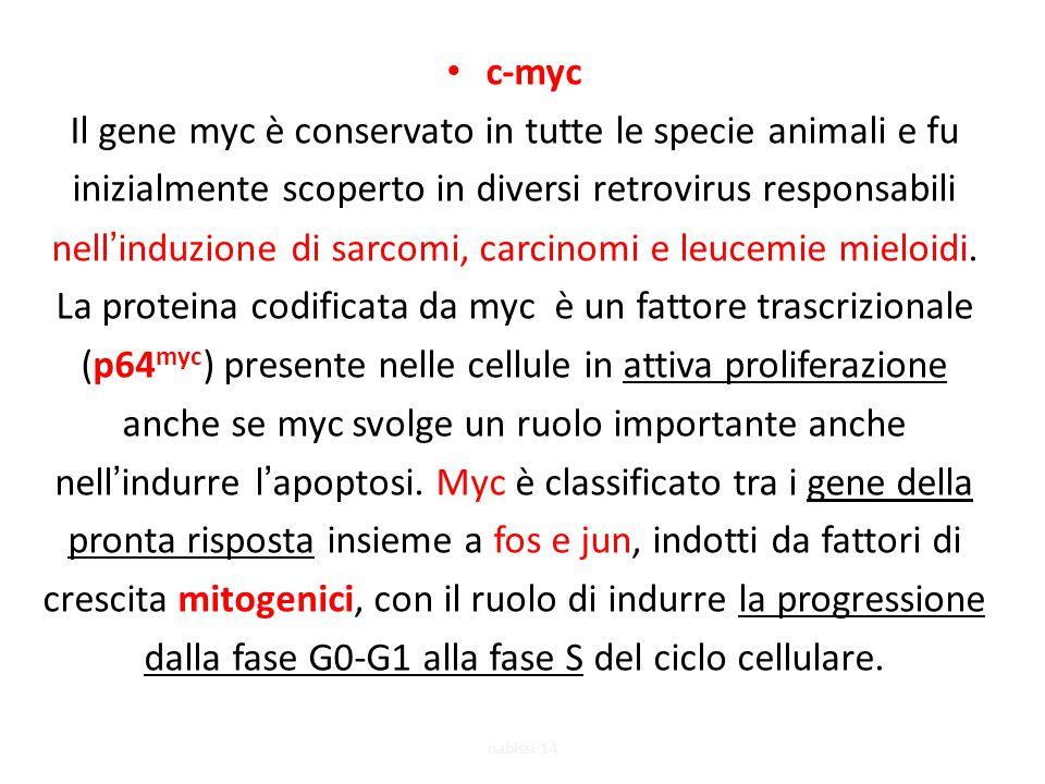 c-myc Il gene myc è conservato in tutte le specie animali e fu inizialmente scoperto in diversi retrovirus responsabili nell'induzione di sarcomi, carcinomi e leucemie mieloidi.