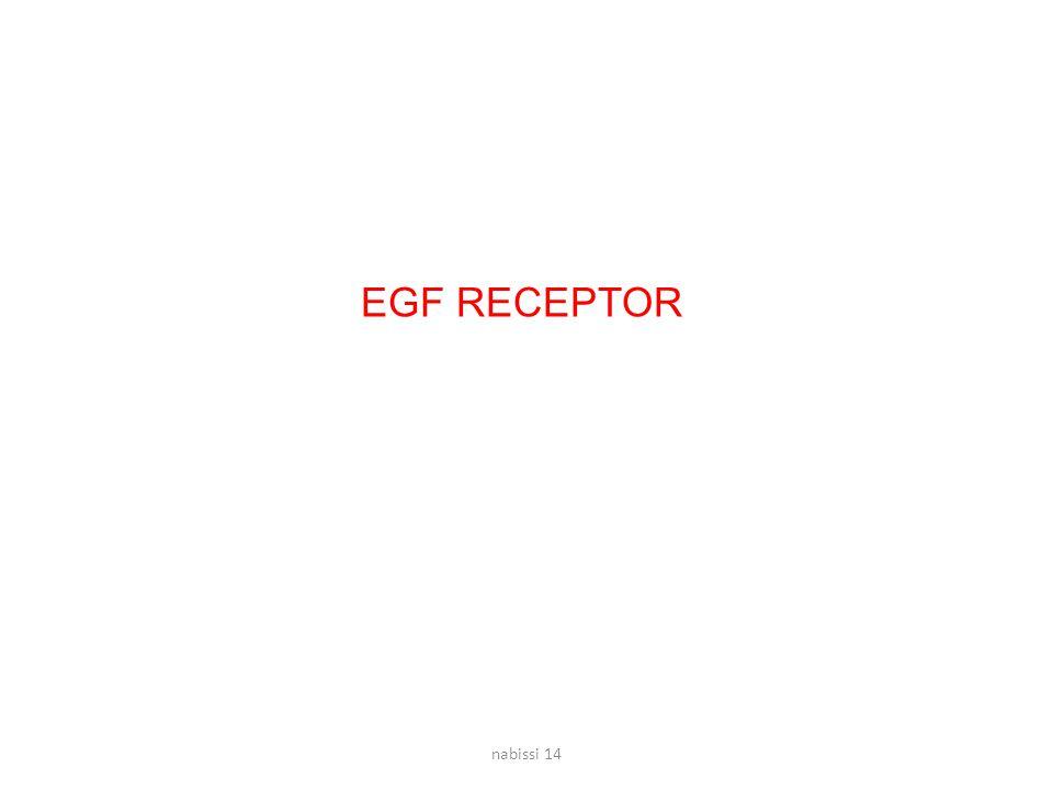 EGF RECEPTOR nabissi 14