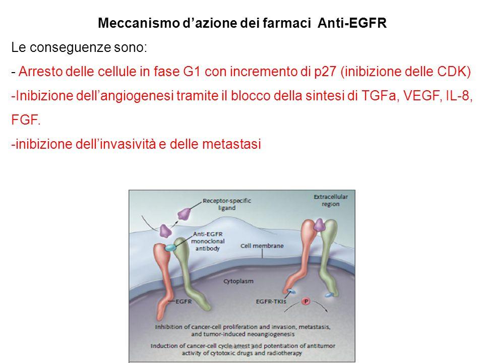 Meccanismo d'azione dei farmaci Anti-EGFR Le conseguenze sono: - Arresto delle cellule in fase G1 con incremento di p27 (inibizione delle CDK) -Inibizione dell'angiogenesi tramite il blocco della sintesi di TGFa, VEGF, IL-8, FGF.