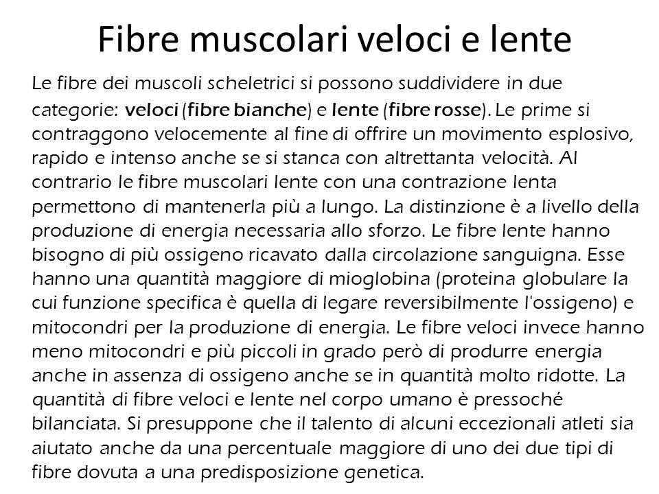 Fibre muscolari veloci e lente Le fibre dei muscoli scheletrici si possono suddividere in due categorie: veloci (fibre bianche) e lente (fibre rosse).