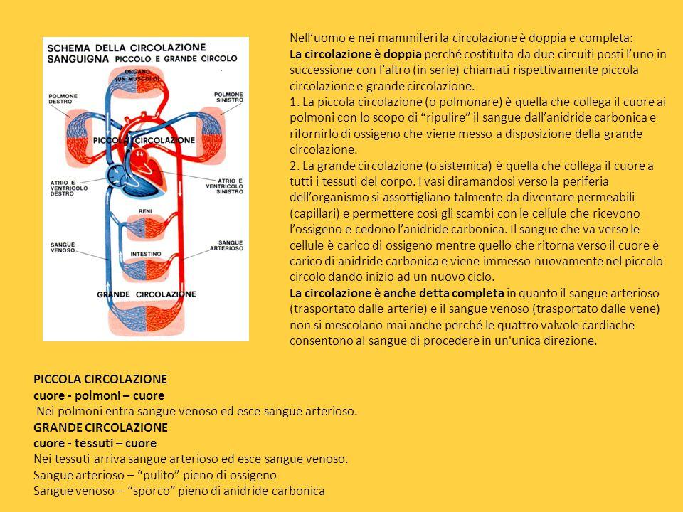 Si intende per apparato circolatorio un sistema composto da una pompa, il cuore, e da tubi, i vasi sanguigni (arterie, vene, capillari, linfatici), di