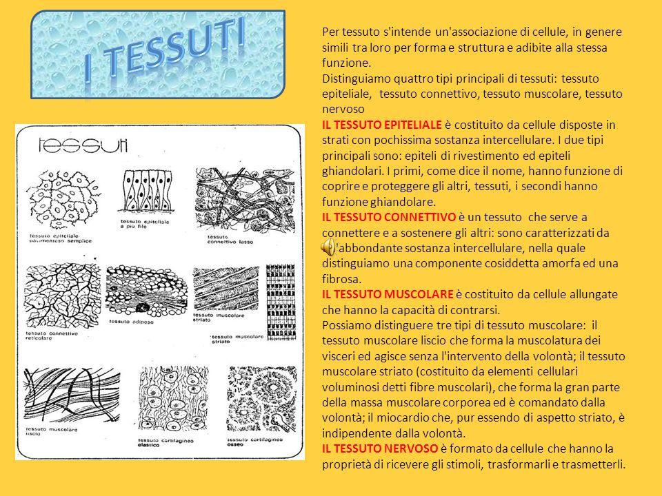 Per tessuto s intende un associazione di cellule, in genere simili tra loro per forma e struttura e adibite alla stessa funzione.