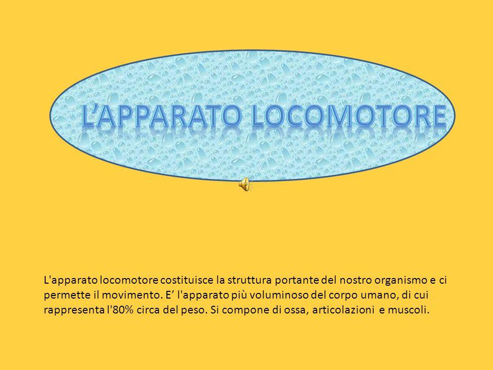 L apparato locomotore costituisce la struttura portante del nostro organismo e ci permette il movimento.