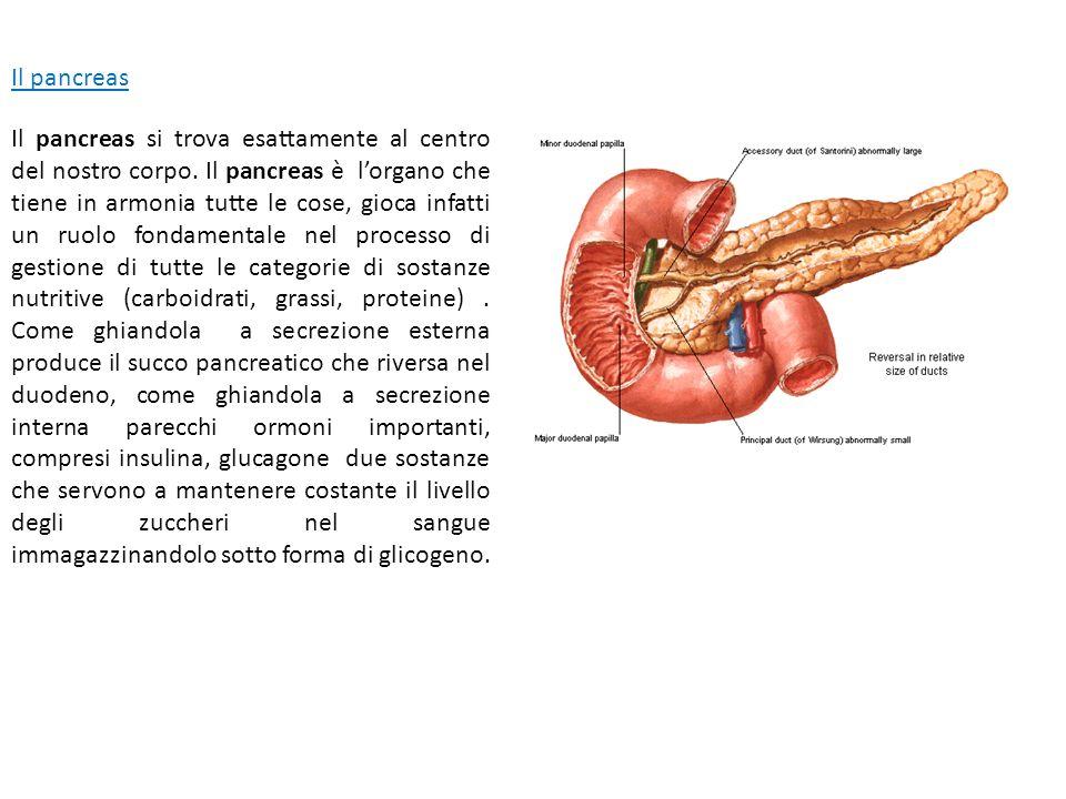 Il pancreas Il pancreas si trova esattamente al centro del nostro corpo. Il pancreas è l'organo che tiene in armonia tutte le cose, gioca infatti un r