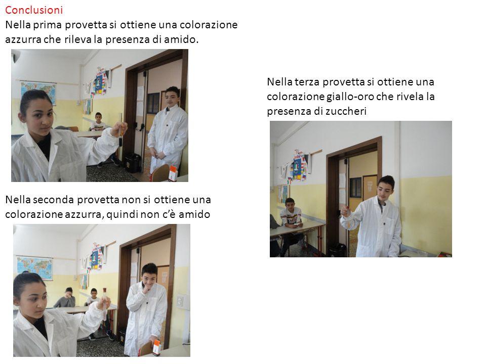 Conclusioni Nella prima provetta si ottiene una colorazione azzurra che rileva la presenza di amido. Nella seconda provetta non si ottiene una coloraz