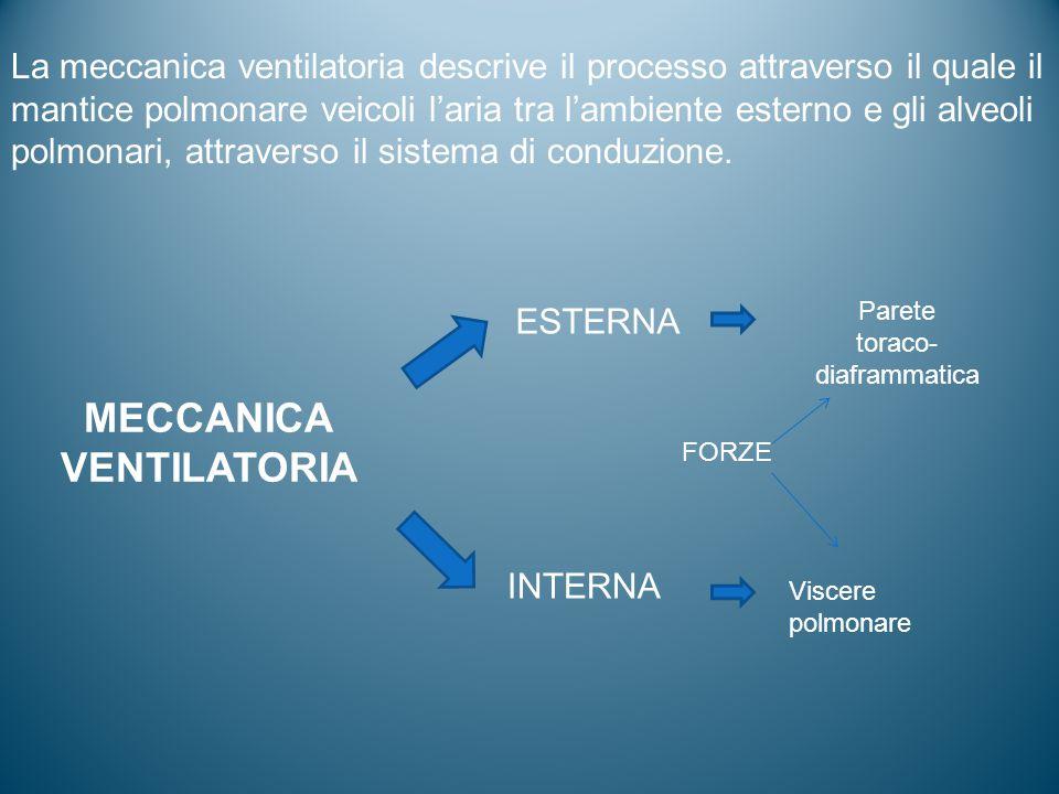 MECCANICA VENTILATORIA ESTERNA INTERNA Parete toraco- diaframmatica Viscere polmonare FORZE La meccanica ventilatoria descrive il processo attraverso