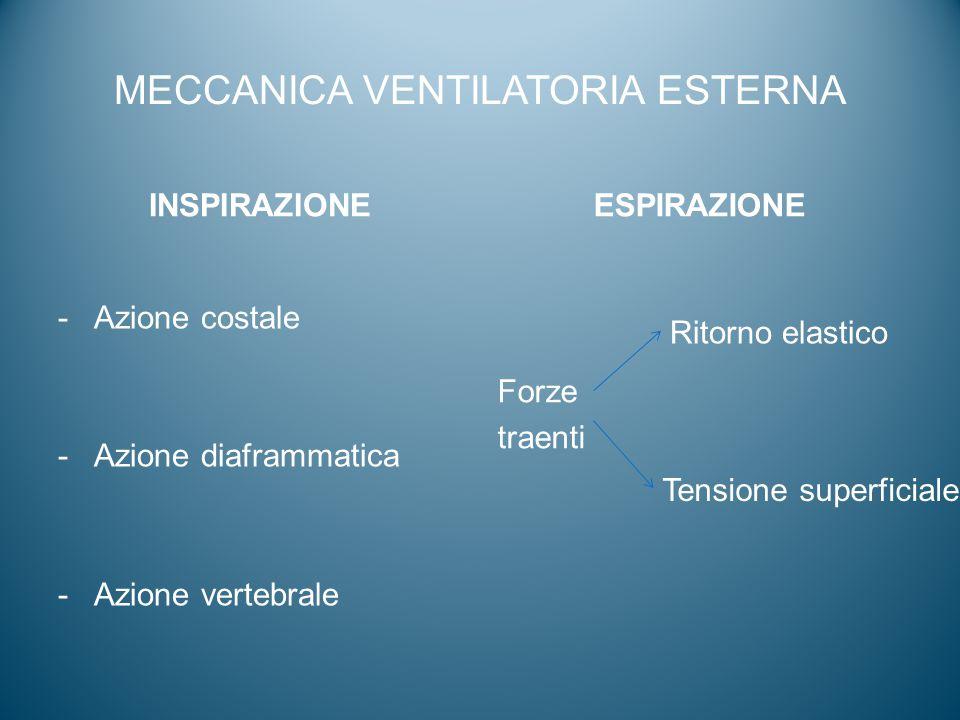 MECCANICA VENTILATORIA ESTERNA INSPIRAZIONE -Azione costale -Azione diaframmatica -Azione vertebrale ESPIRAZIONE Forze traenti Ritorno elastico Tensio