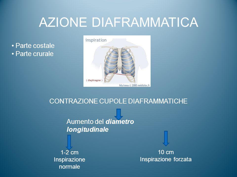 AZIONE DIAFRAMMATICA CONTRAZIONE CUPOLE DIAFRAMMATICHE Aumento del diametro longitudinale 1-2 cm Inspirazione normale 10 cm Inspirazione forzata Parte
