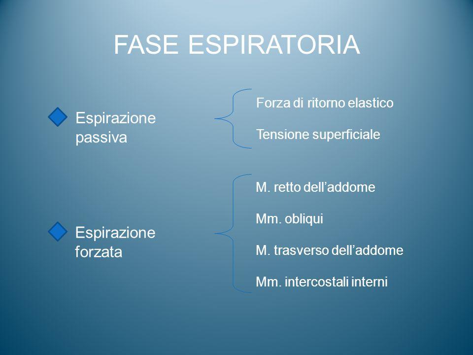 FASE ESPIRATORIA Espirazione passiva Espirazione forzata Forza di ritorno elastico Tensione superficiale M. retto dell'addome Mm. obliqui M. trasverso