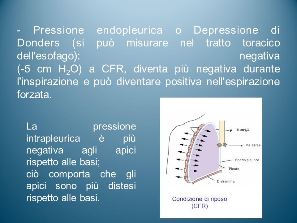 - Pressione endopleurica o Depressione di Donders (si può misurare nel tratto toracico dell'esofago): negativa (-5 cm H 2 O) a CFR, diventa più negati