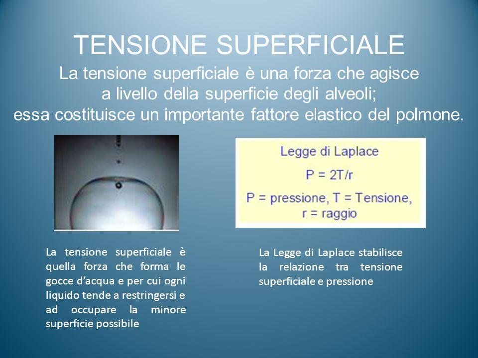 TENSIONE SUPERFICIALE La tensione superficiale è una forza che agisce a livello della superficie degli alveoli; essa costituisce un importante fattore
