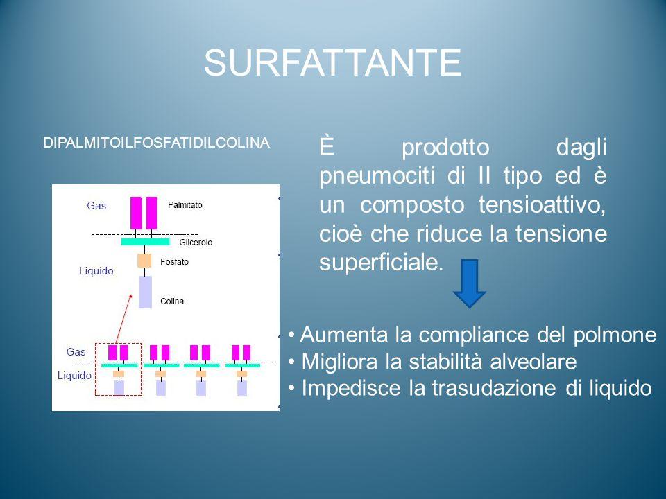 SURFATTANTE È prodotto dagli pneumociti di II tipo ed è un composto tensioattivo, cioè che riduce la tensione superficiale. Aumenta la compliance del