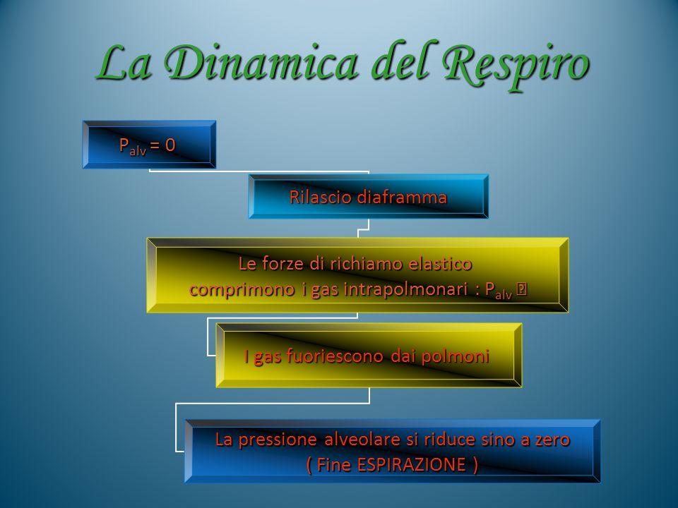 La Dinamica del Respiro Palv = 0 Rilascio diaframma Le forze di richiamo elastico comprimono i gas intrapolmonari : Palv  I gas fuoriescono dai polmo