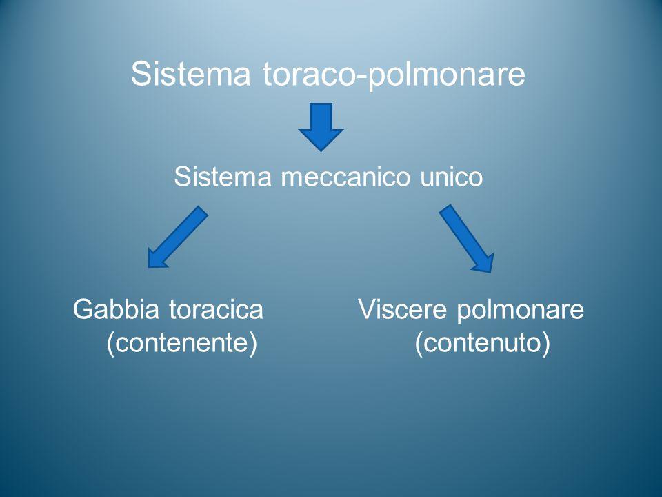Sistema toraco-polmonare Sistema meccanico unico Gabbia toracica Viscere polmonare (contenente) (contenuto)