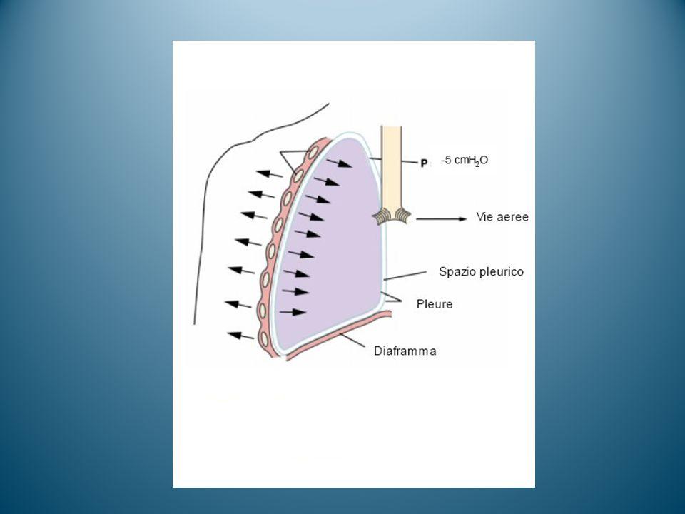 CICLO RESPIRATORIO La pressione alveolare eguaglia la pressione atmosferica, quindi non c'è flusso Legge di Boyle P x V = K La pressione di ritorno elastico crea un flusso d'aria verso l'esterno