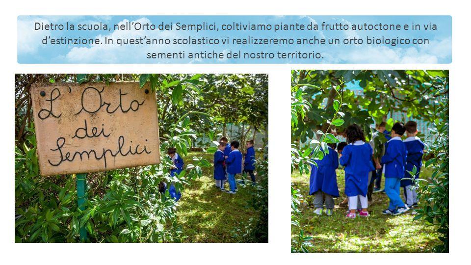 Dietro la scuola, nell'Orto dei Semplici, coltiviamo piante da frutto autoctone e in via d'estinzione. In quest'anno scolastico vi realizzeremo anche