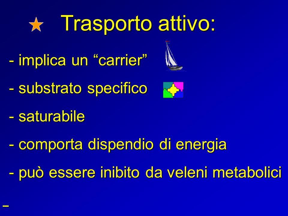 """Trasporto attivo: - implica un """"carrier"""" - substrato specifico - saturabile - comporta dispendio di energia - può essere inibito da veleni metabolici"""