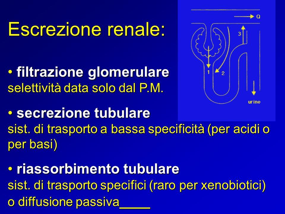 Escrezione renale: filtrazione glomerulare filtrazione glomerulare selettività data solo dal P.M. secrezione tubulare secrezione tubulare sist. di tra