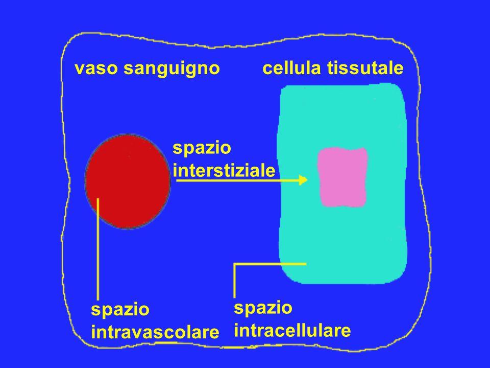 spazio interstiziale spazio intravascolare spazio intracellulare vaso sanguignocellula tissutale