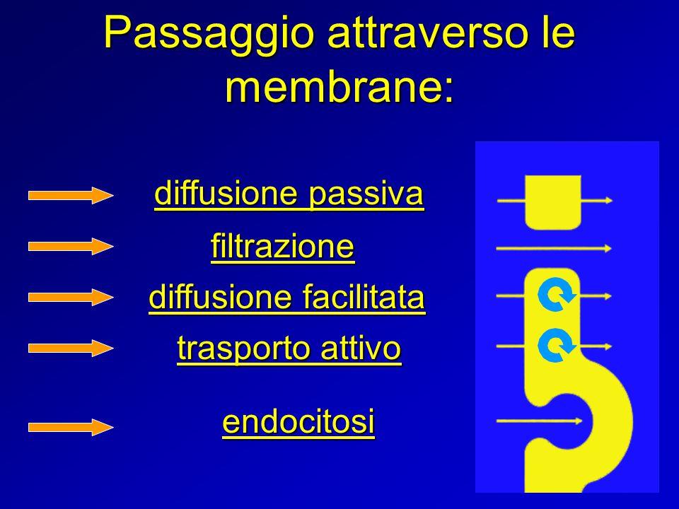 Passaggio attraverso le membrane: endocitosi trasporto attivo diffusione facilitata filtrazione diffusione passiva