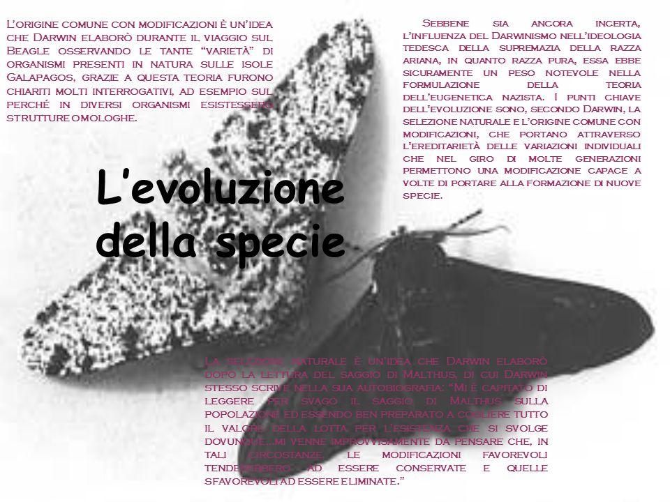 L'evoluzione della specie Sebbene sia ancora incerta, l'influenza del Darwinismo nell'ideologia tedesca della supremazia della razza ariana, in quanto