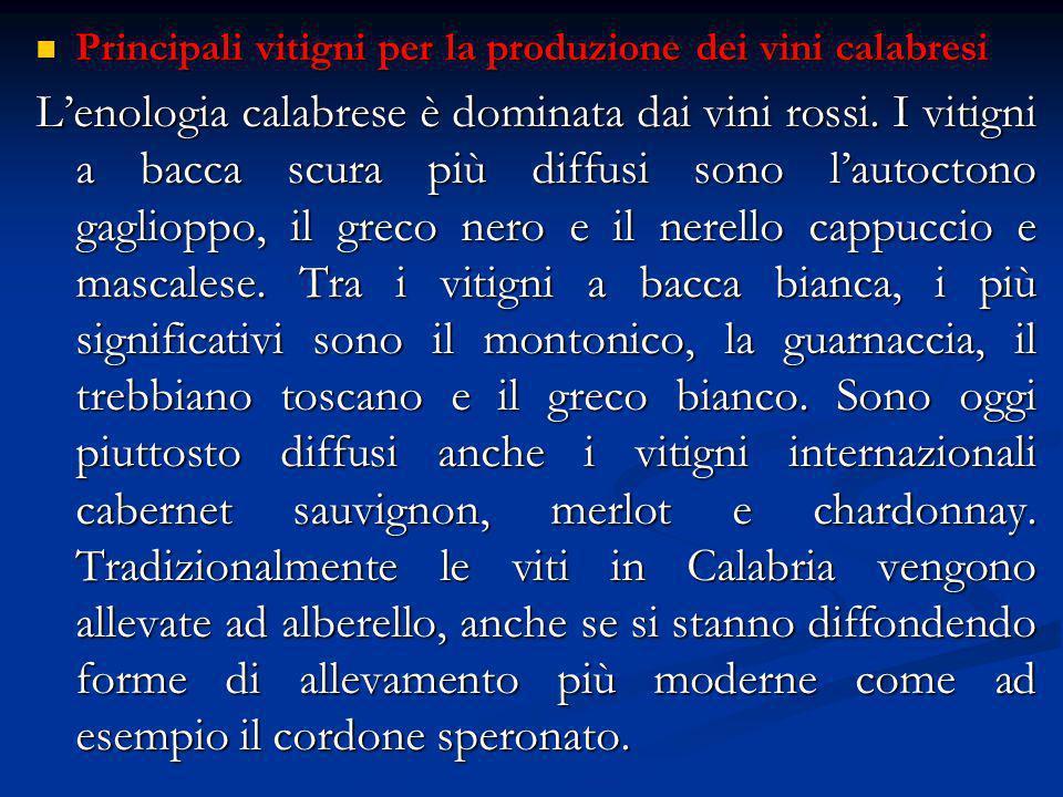 Principali vitigni per la produzione dei vini calabresi Principali vitigni per la produzione dei vini calabresi L'enologia calabrese è dominata dai vini rossi.
