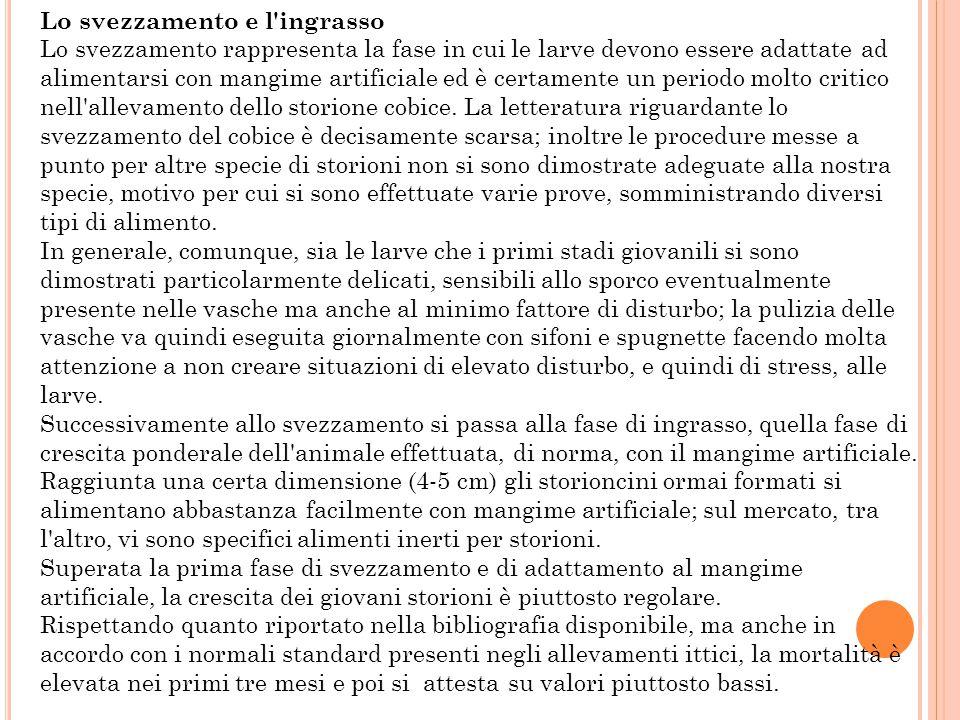 T ECNICHE DI ALLEVAMENTO E DI FECONDAZIONE ARTIFICIALE In Italia si alleva, per la carne e il caviale, lo storione bianco america-no (Acipenser transm