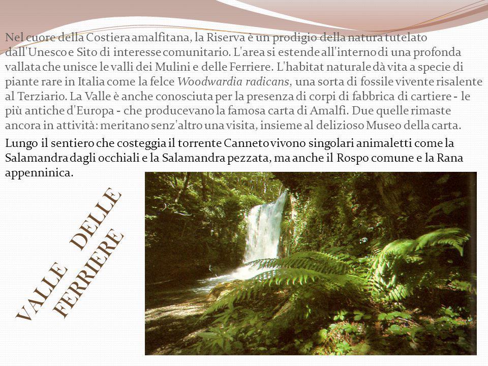 Nel cuore della Costiera amalfitana, la Riserva è un prodigio della natura tutelato dall Unesco e Sito di interesse comunitario.