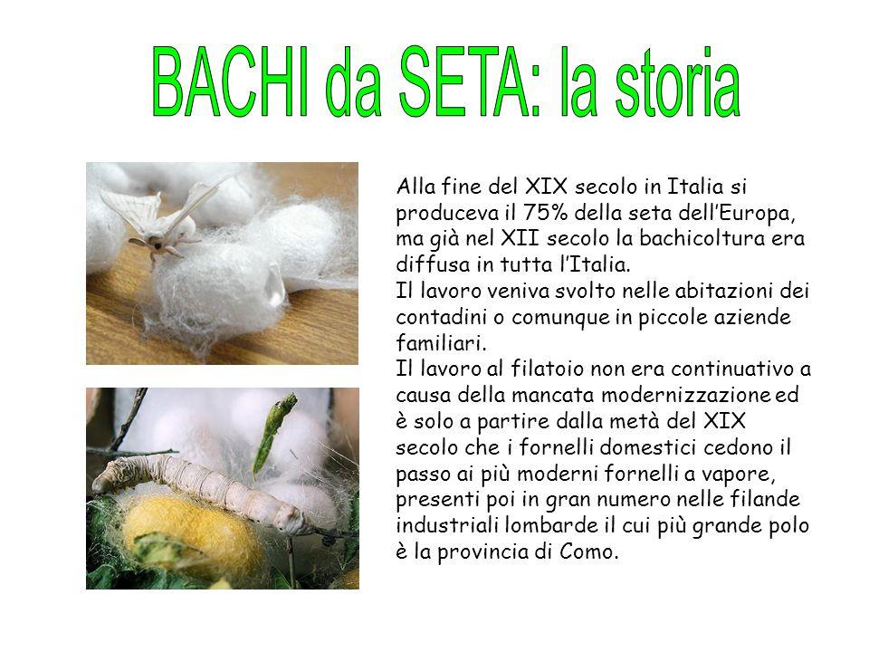 Alla fine del XIX secolo in Italia si produceva il 75% della seta dell'Europa, ma già nel XII secolo la bachicoltura era diffusa in tutta l'Italia. Il