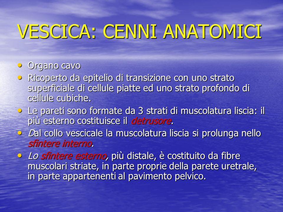 VESCICA: CENNI ANATOMICI Organo cavo Organo cavo Ricoperto da epitelio di transizione con uno strato superficiale di cellule piatte ed uno strato prof