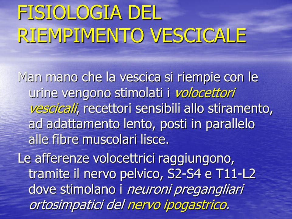 FISIOLOGIA DEL RIEMPIMENTO VESCICALE Man mano che la vescica si riempie con le urine vengono stimolati i volocettori vescicali, recettori sensibili al