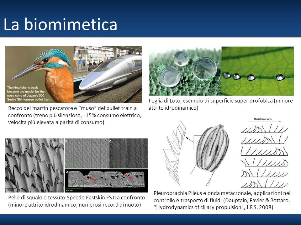 """La biomimetica Becco del martin pescatore e """"muso"""" del bullet train a confronto (treno più silenzioso, -15% consumo elettrico, velocità più elevata a"""